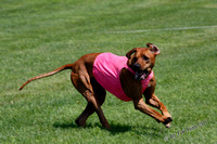 2015 Lure Coursing