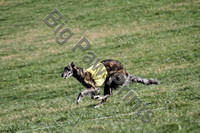 2012 Lure Coursing